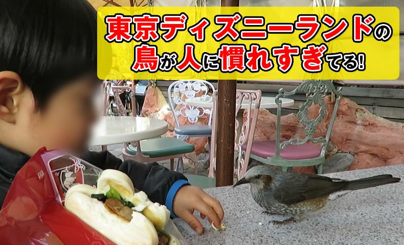 東京ディズニーランドの鳥が人に慣れすぎてる