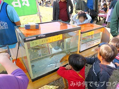 朝霞の森秋まつり魚展示