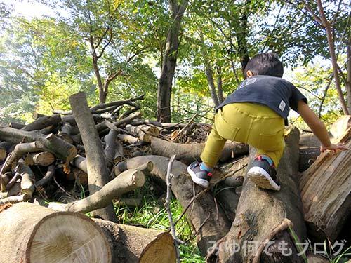 朝霞の森秋まつり風景(伐採された木々)